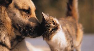 I nomi per cani e gatti più diffusi