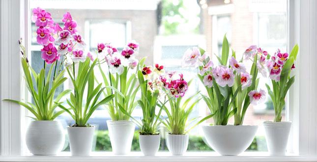 Come mantenere le tue piante innaffiate durante le vacanze.